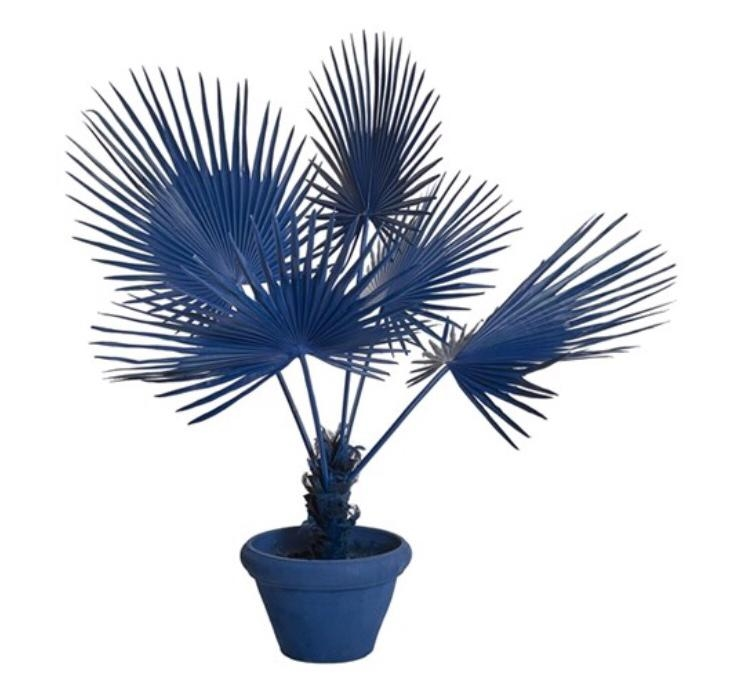 FAN PALM IN POT DARK BLUE